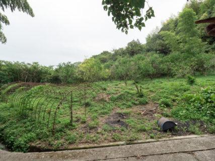 耕作放棄地の再生